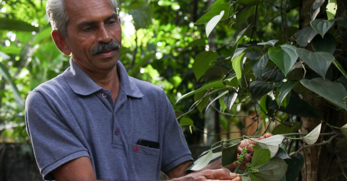 This Organic Farmer in Kerala Is Growing 100 Plant Species on Just 1 Acre of Land!