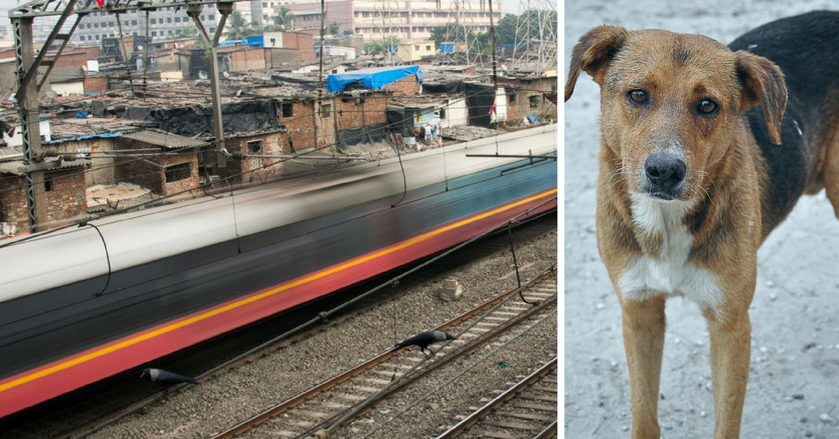 This Motorman Stopped a Local Train in Mumbai to Save a Life – a Dog's!