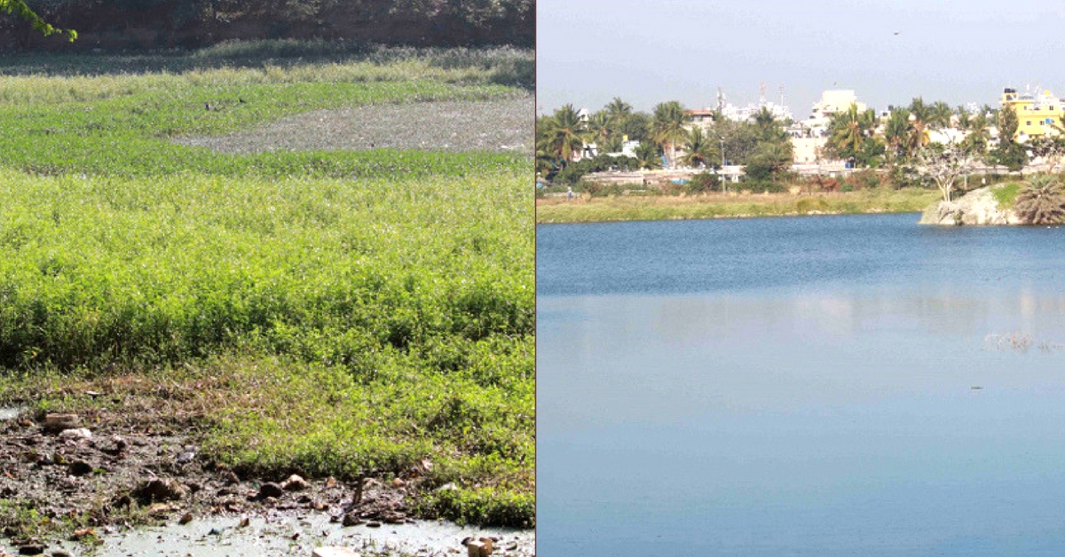 Wake the Lake: How This Campaign Helped Revive 16 Lakes in Bengaluru