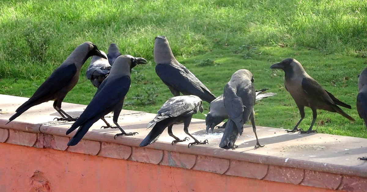 Cigarette Butts & Crows? This Dutch Company's Idea Could Help India Tackle Our Waste Crisis