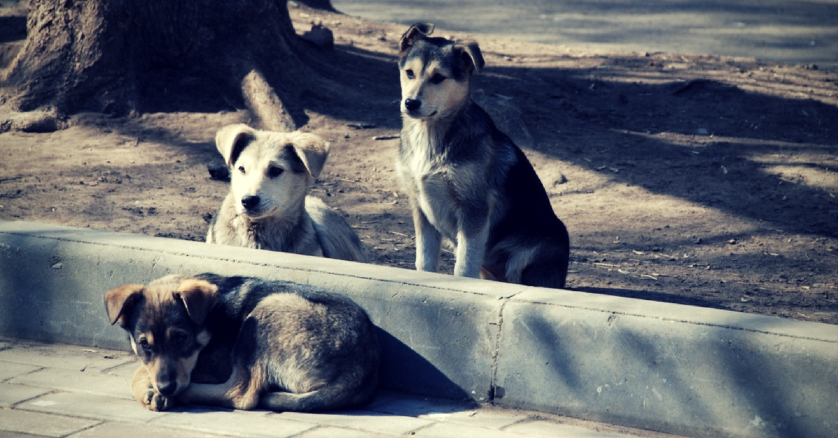 Kerala Becomes the First State in India to Manufacture Its Own Anti-Rabies Vaccine