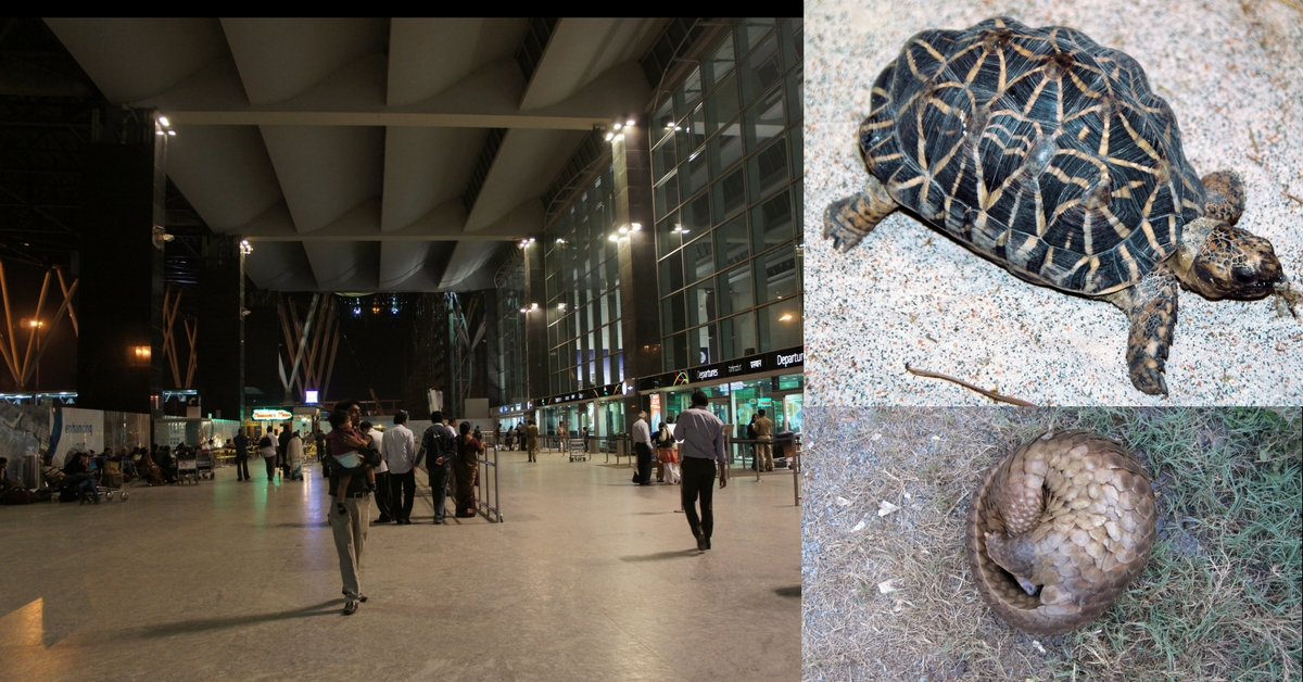 Wildlife Smugglers Will No Longer Find Bengaluru Airport an Easy Transit