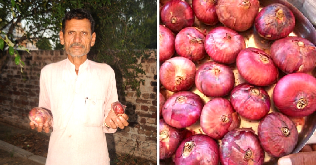 After 17 Years, Farmer Balwan Has Created a Bigger, Better Onion All by Himself
