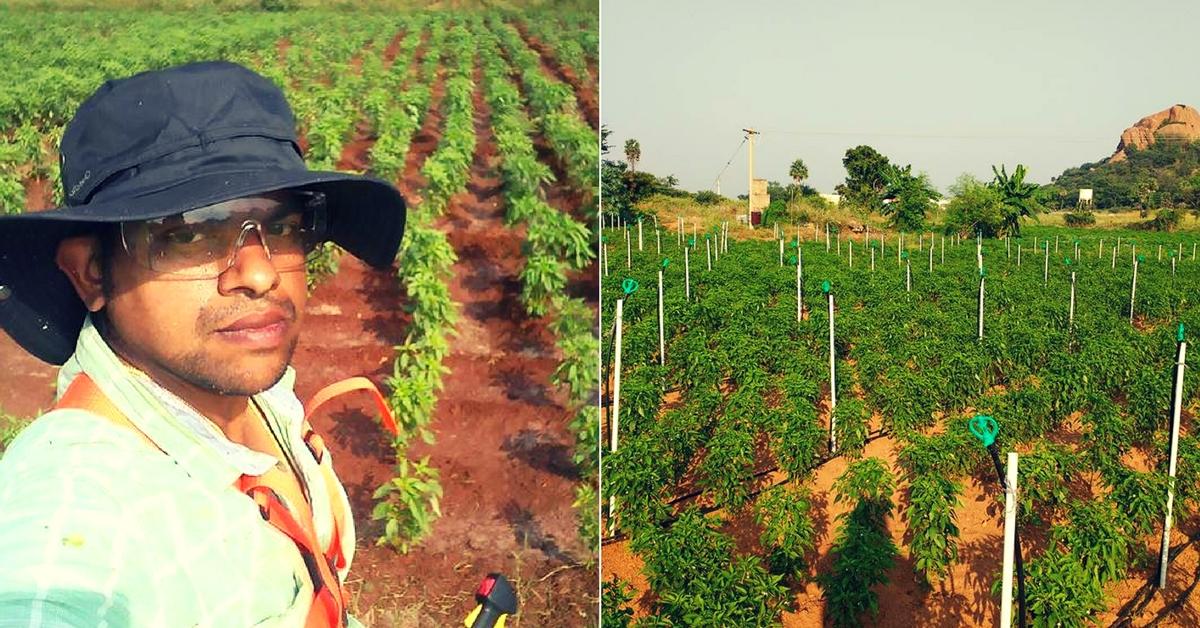Bengaluru Techie Travels to Tamil Nadu Every Weekend, Just to Farm!