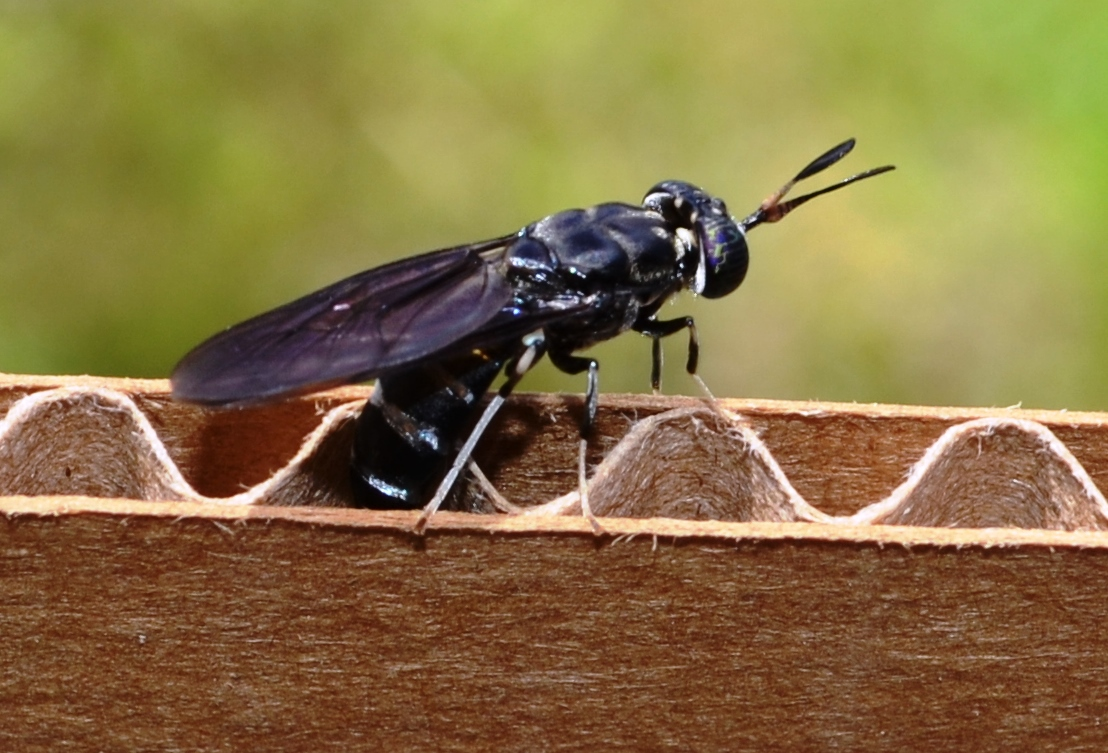 5 bugs you probably didn't know could save the environment