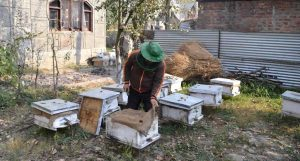 A Kashmiri beekeeper is seen attending to his beehives. (Photo by Athar Parvaiz)