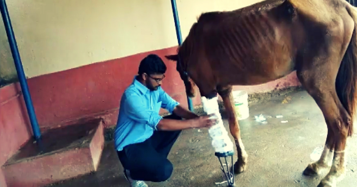 This Abandoned Horse Has a Prosthetic Limb, but Now He Needs You Help!