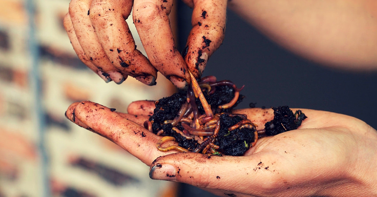 Power of Bugs: Five Eco-Warrior Organisms That Can Save the Environment!
