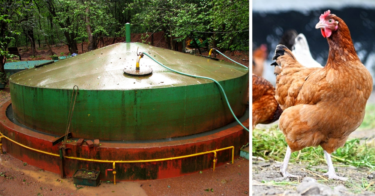 How an Innovative Poultry Farmer is Generating Electricity from Chicken Droppings