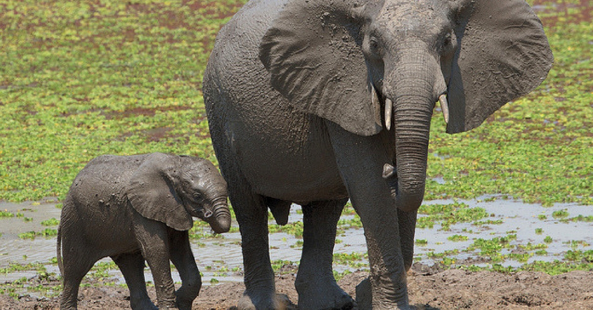 Video: This Touching Elephant Reunion Will Make Your Heart Melt