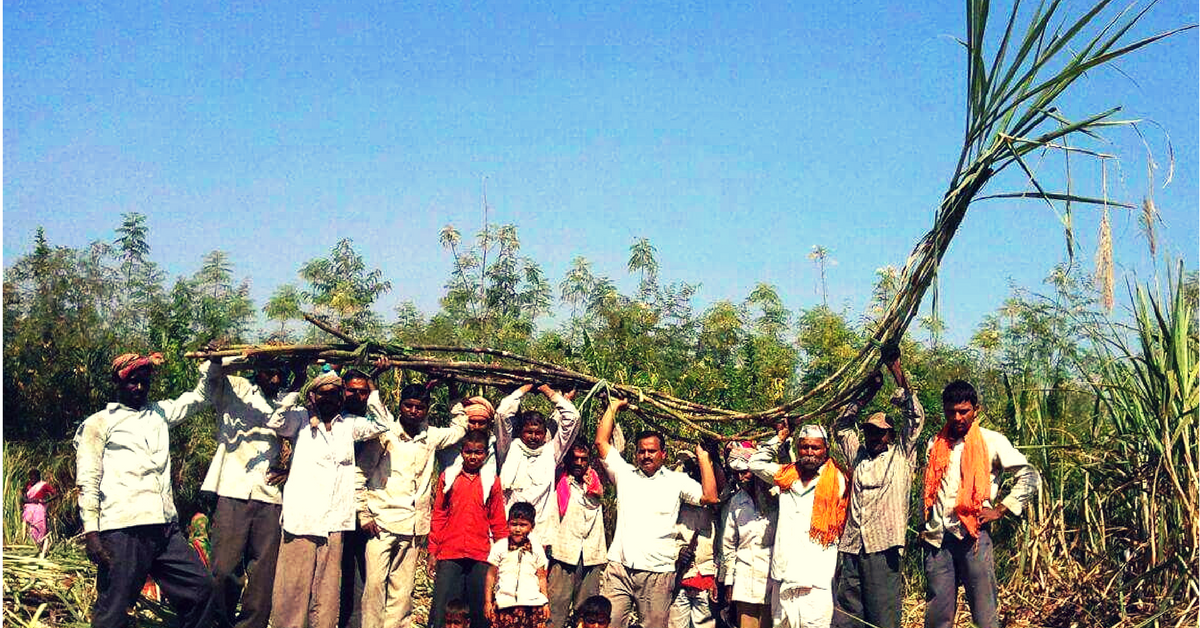 This Farmer Grew 100 Tonnes of 20-Foot Tall Sugarcane in One Acre! Here's How!