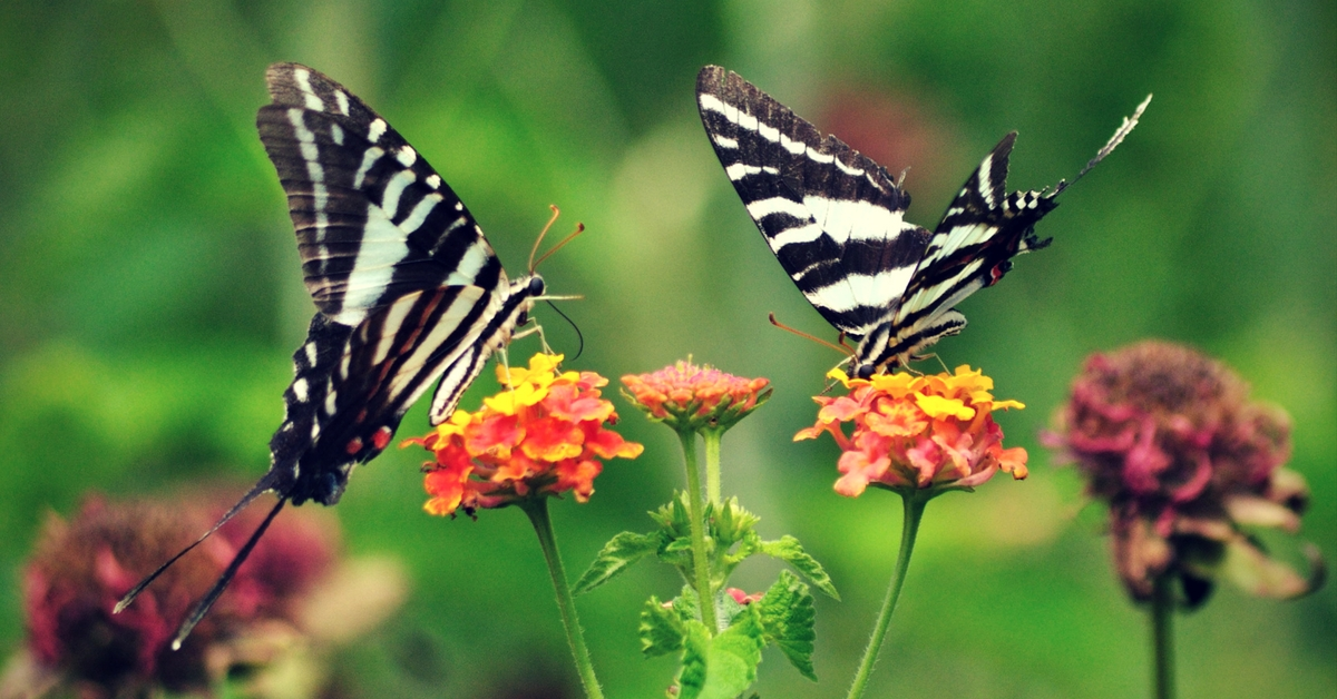 Unwind with Exotic Butterflies? Kerala's New Parks Will Make This Possible