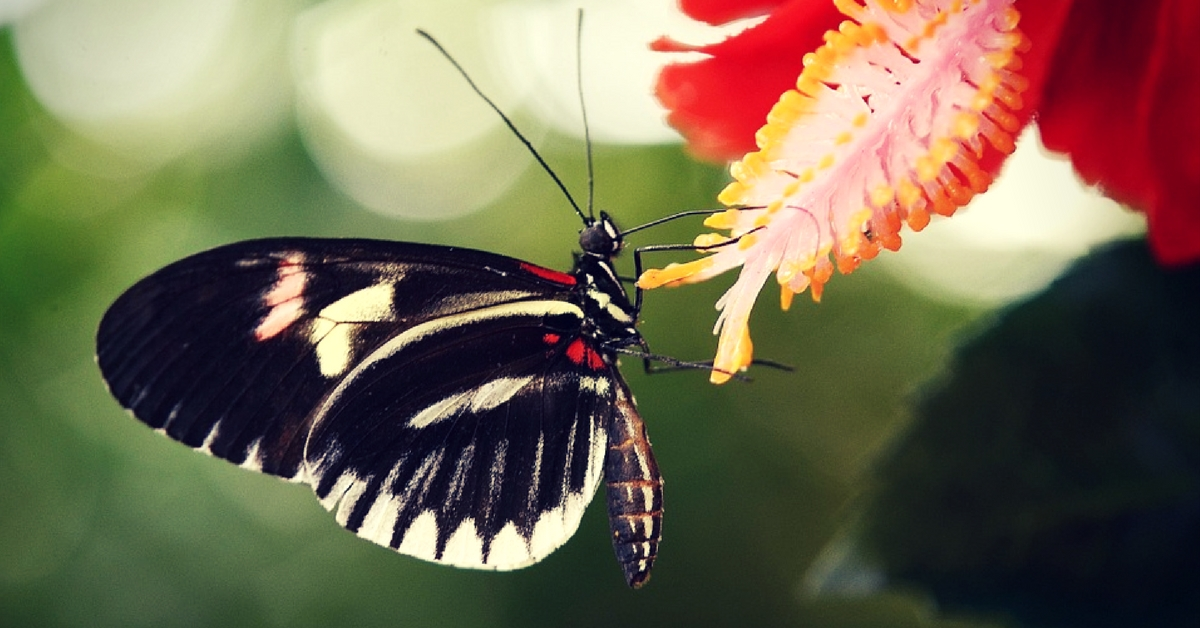 Kerala's butterfly parks will be a welcome retreat for citizens as well.Representative image only. Image Courtesy:MaxPixel