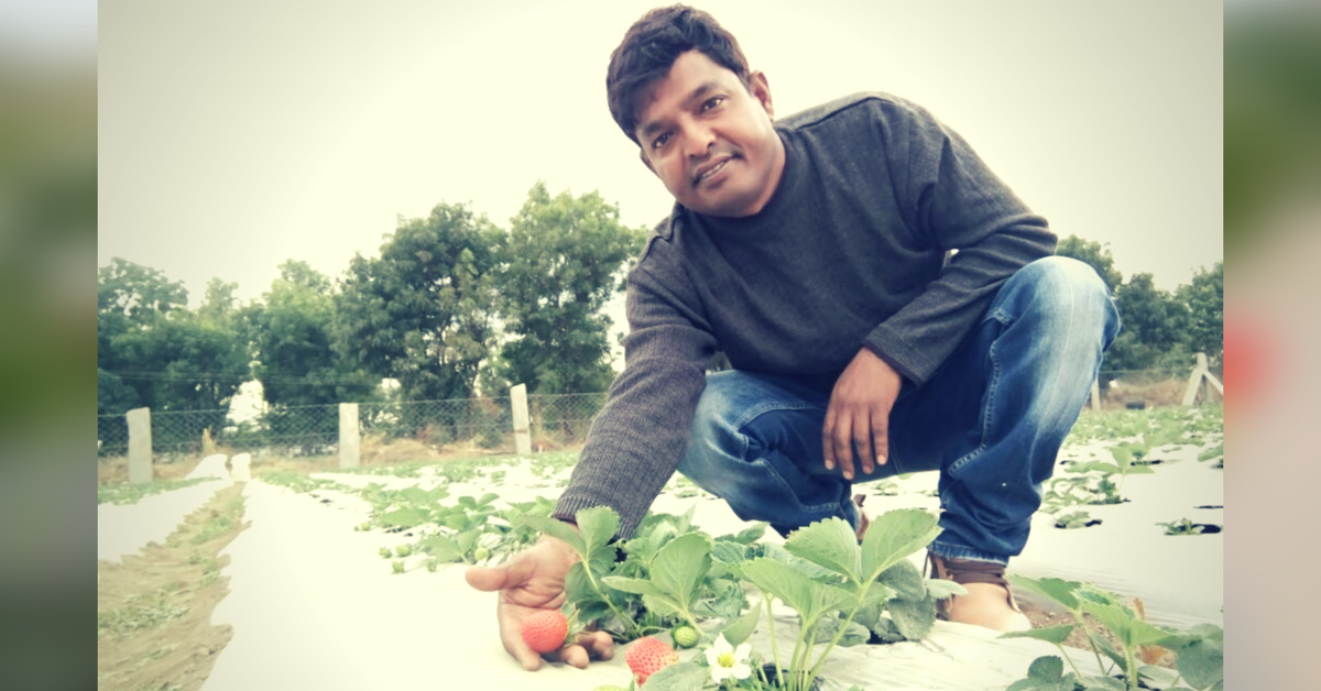 This Engineer Learnt Farming on YouTube and Grew Strawberries in Rajasthan!