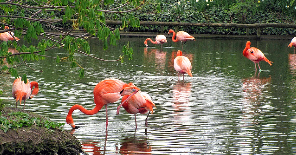 For The First Time, Mumbaikars Can Soon Watch Flamingos Up Close In Thane