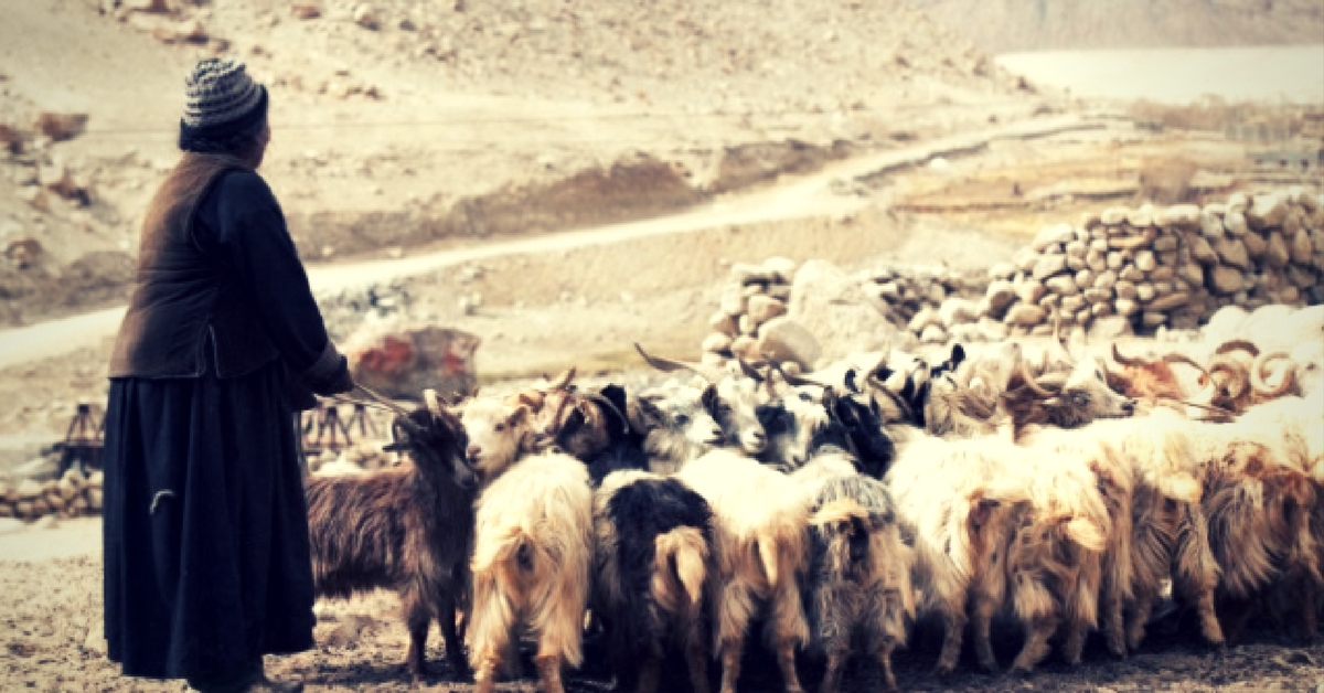What You Probably Didn't Know About Ladakh's History With the Pashmina