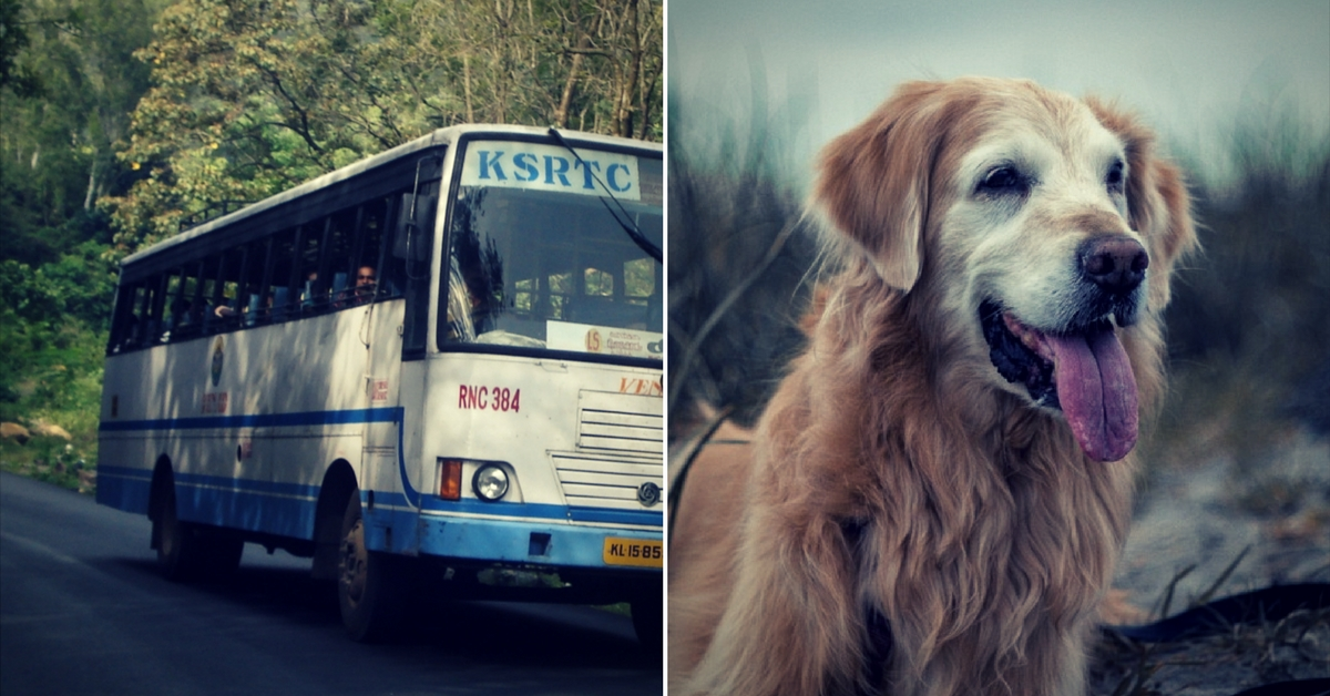 The Next Time You Want to Board a KSRTC State Bus, You Can Take Your Pet Along!