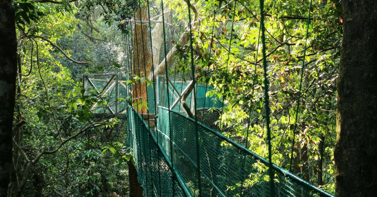 Karnataka All Set to Unveil India's First Ever Canopy Walk on February 18!