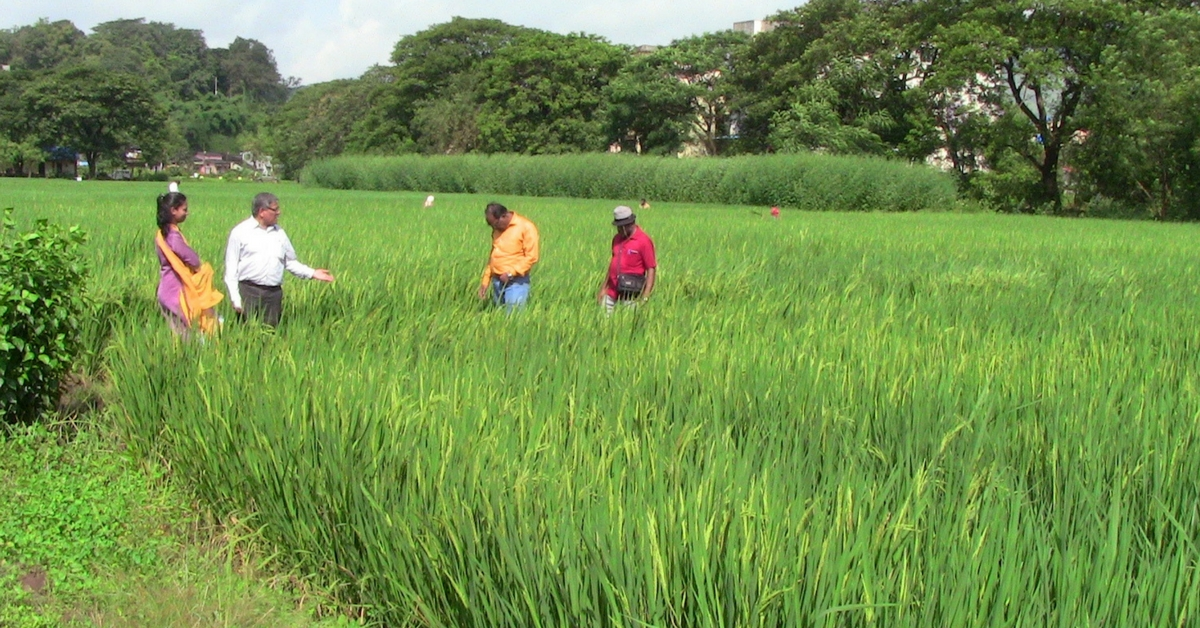 100 Years & Over 20 Varieties: Celebrating India's First Rice Research Institute