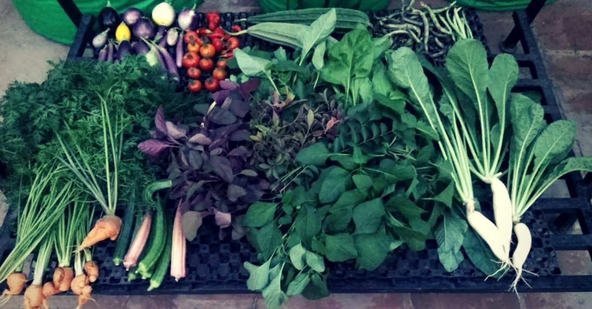 All the vegetables are grown naturally, at Indra Terrace Gardens Chennai. Image Courtesy: Indra Terrace Gardens.