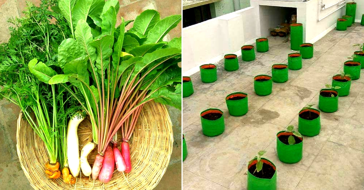 At the Indra Terrace Garden, growing any vegetable requires considerable care and effort. Image Courtesy: Indra Terrace Garden, Chennai