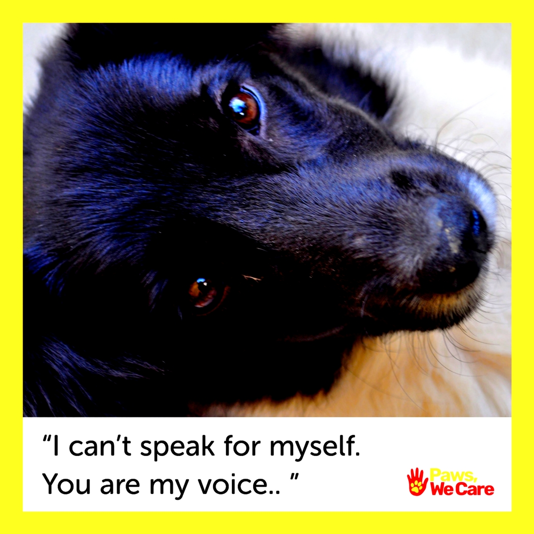 Paws, We Care, aims to educate those planning to add a new furry member to their family.Image Courtesy: Paws, We Care.