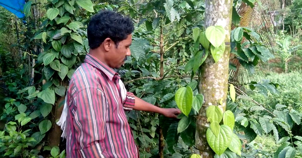 This Man's Efforts Fetched an Amazing Find – a Rare, Immunity Boosting Pepper!