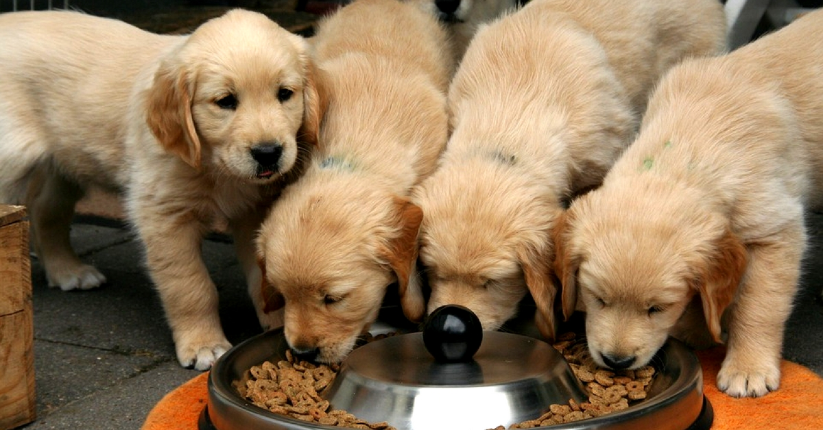 Puppies are cute, but raising one requires a considerable amount of time! Representative image only. Image Courtesy: Pixabay