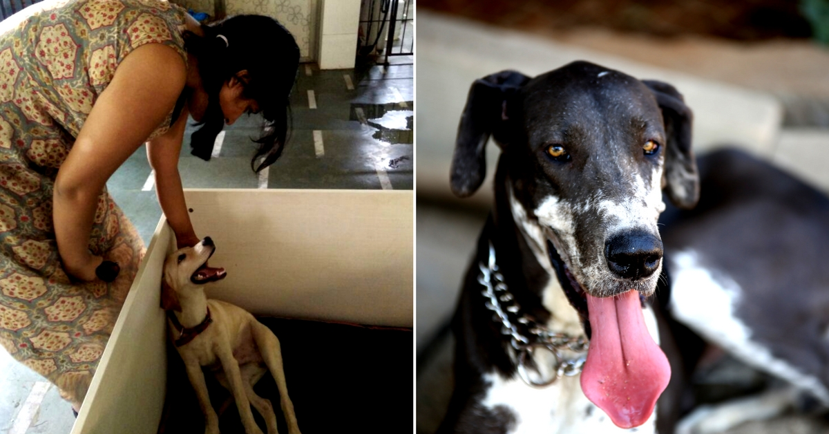 Raising a dog requires a lot of effort, something that everyone isn't able to commit.Image Courtesy: Paws, We Care.