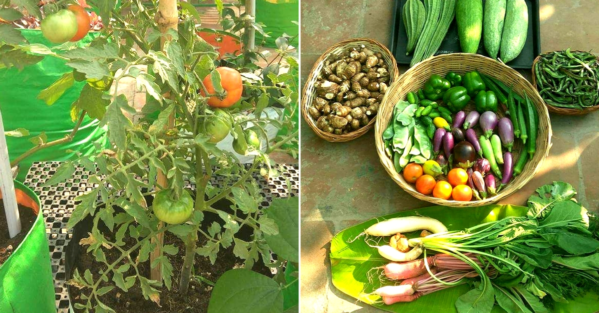 Starting with flowers, Indra Terrace Garden Chennai soon started growing vegetables. Image Courtesy: Indra Terrace Gardens