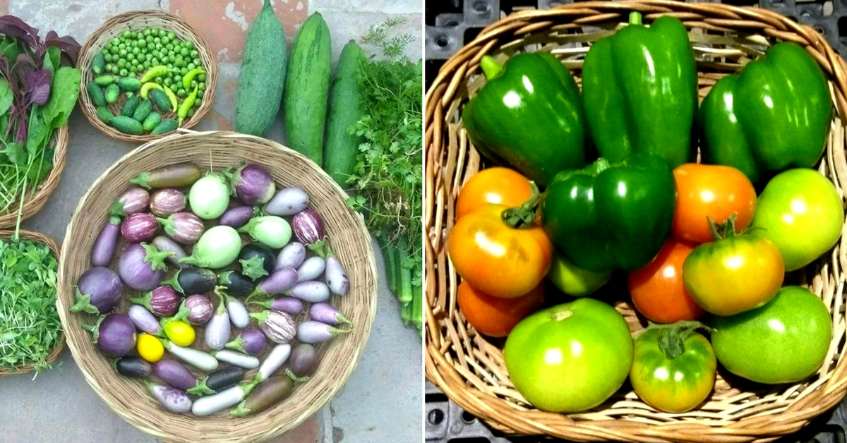 The founders of the Indra Terrace Garden believe rooftop farming to be a sustainable and viable method. Image Courtesy: Indra Terrace Garden