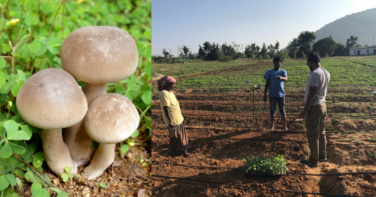 This Ex-Garment Worker's Tiny Mushroom Farm Earns Rs 30,000 in a Month!