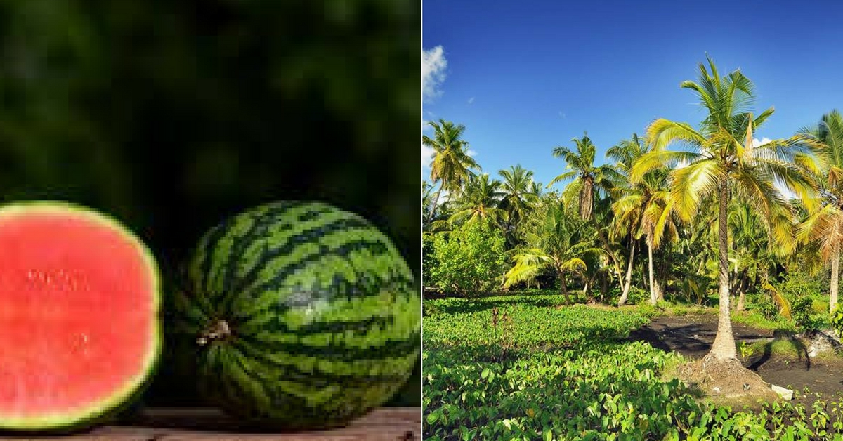 How Seeds from Kerala Are Making the Island Farmers of the Maldives Rich!