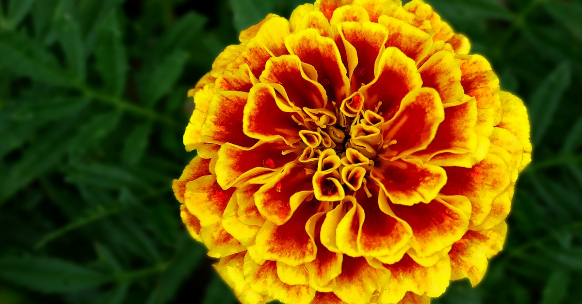 Flower Power in Your Food: 10 Edible Blooms That Can Electrify Your Dish