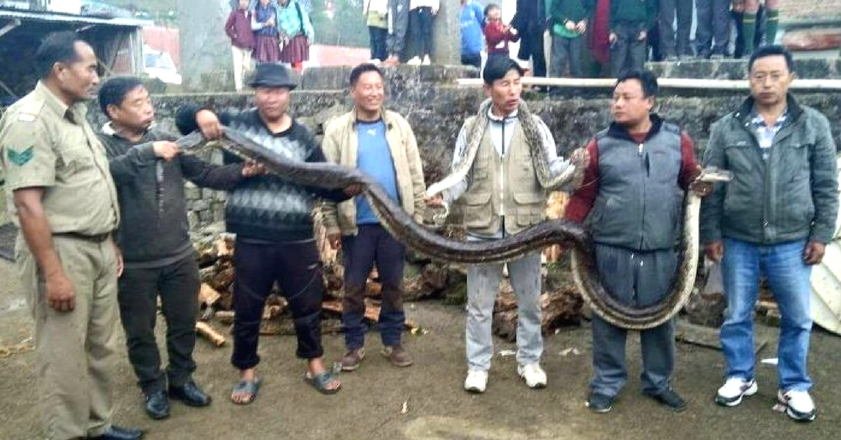 Nagaland Villagers Did Something Unforgettable for This Mother-Baby Duo of Pythons