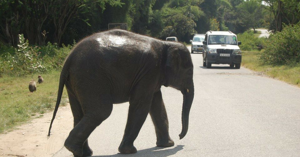 Honking, Littering, Teasing Animals In Karnataka Forests Will Now Prove Costly!