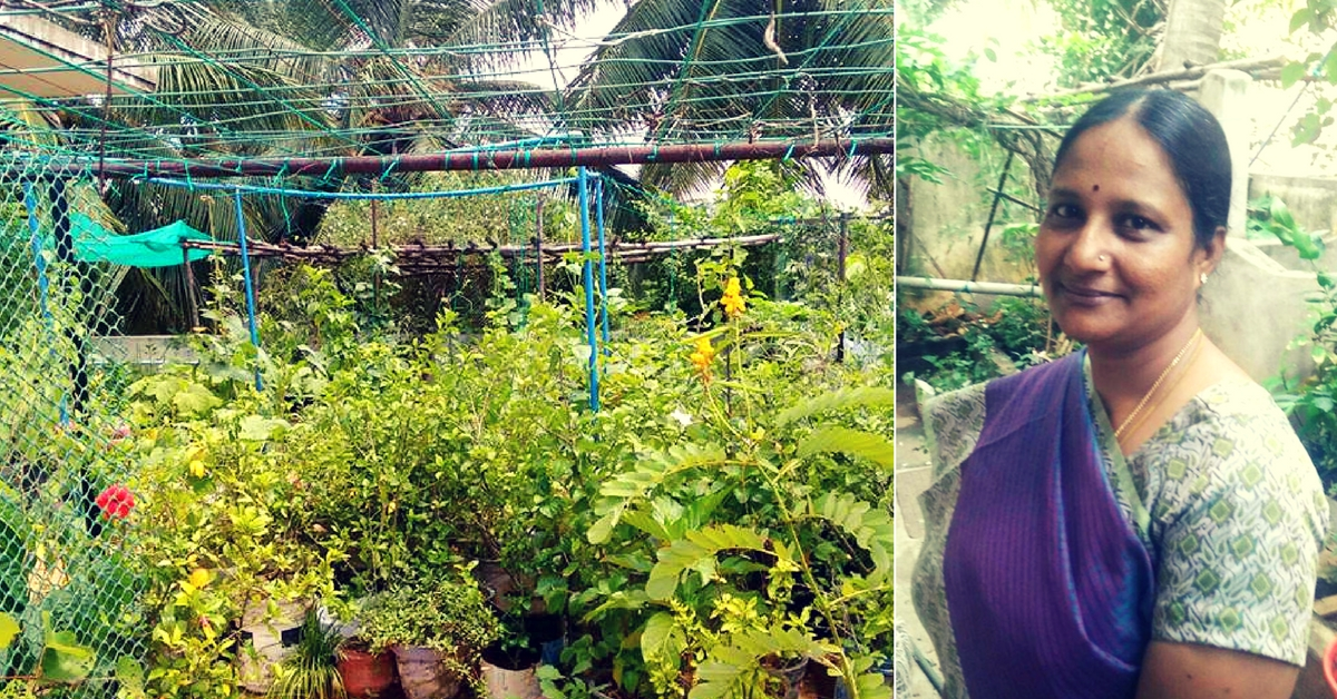 Want to Set up a Terrace Garden? Let Chennai's Top Terrace Gardener Guide You!