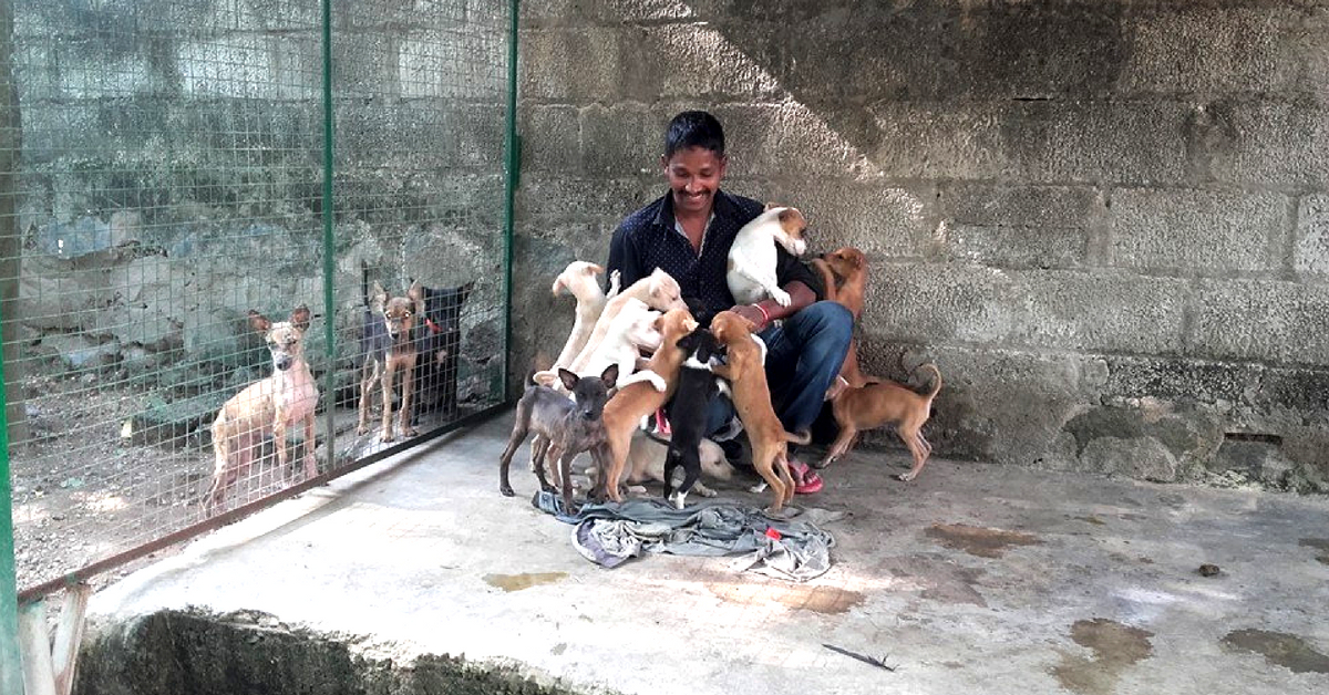 Days at Street Dog Watch Association are packed, starting from rising early and cleaning enclosures, to feeding the dogs. Image Credit: Street Dog Watch Association.