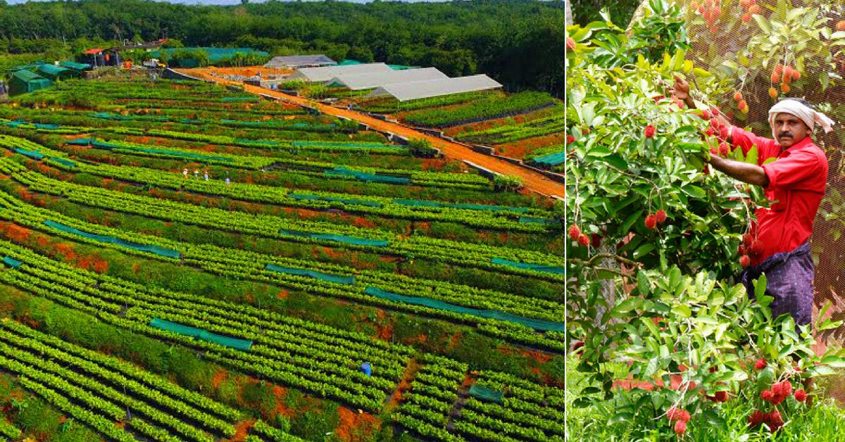 Santol to Cempadek: This Kerala Farm Grows over 32 Varieties of Exotic Fruits!