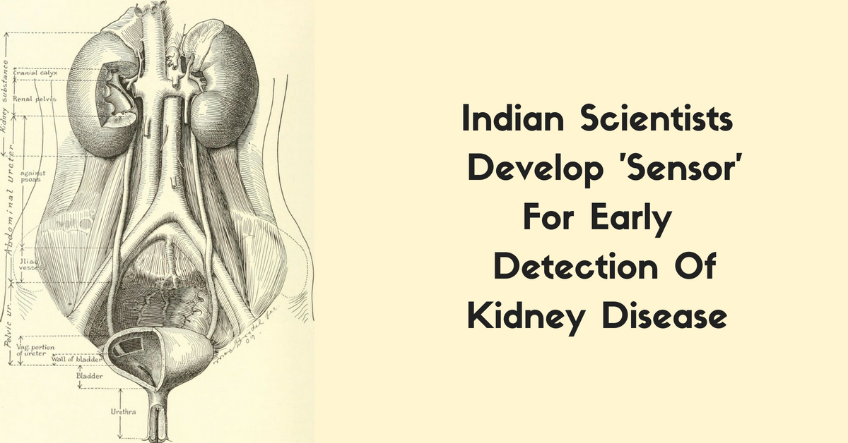 Indian Scientists Develop 'Sensor' For Early Detection of Chronic Kidney Disease