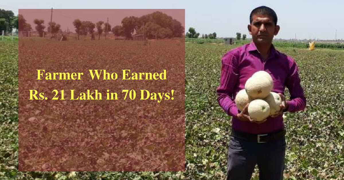 21 Lakhs In 70 Days Growing Muskmelons Helped A Farmer Earn This