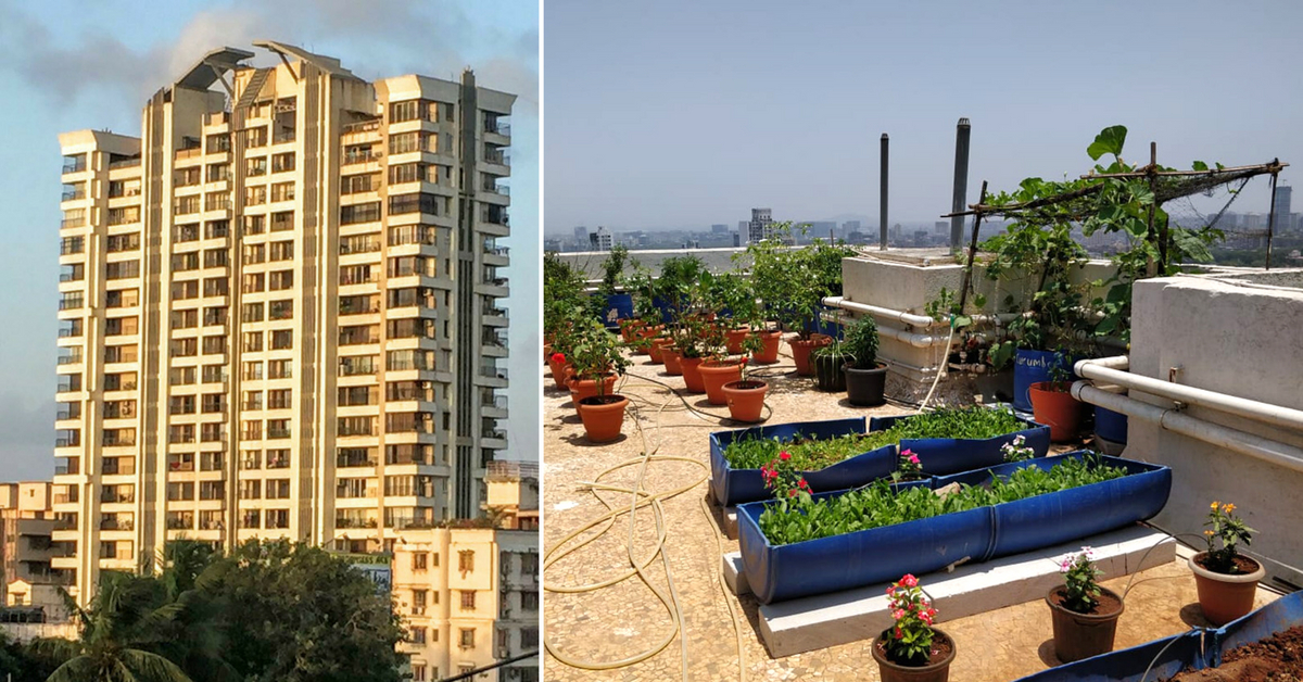 Mumbai Apartment Recycles 8000 Kg of Waste, Grows its Own Organic Food!