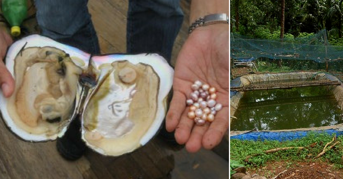 Gurugram Engineer Switches to Pearl Farming, Now Earns ₹4 Lakh Per Year!