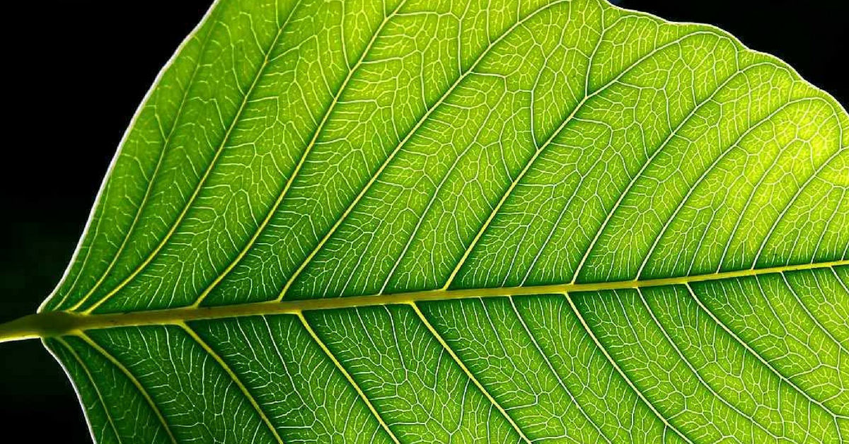 IISc Makes Carbon-Guzzling Artificial Leaf That Produces Fuel & Releases Oxygen!