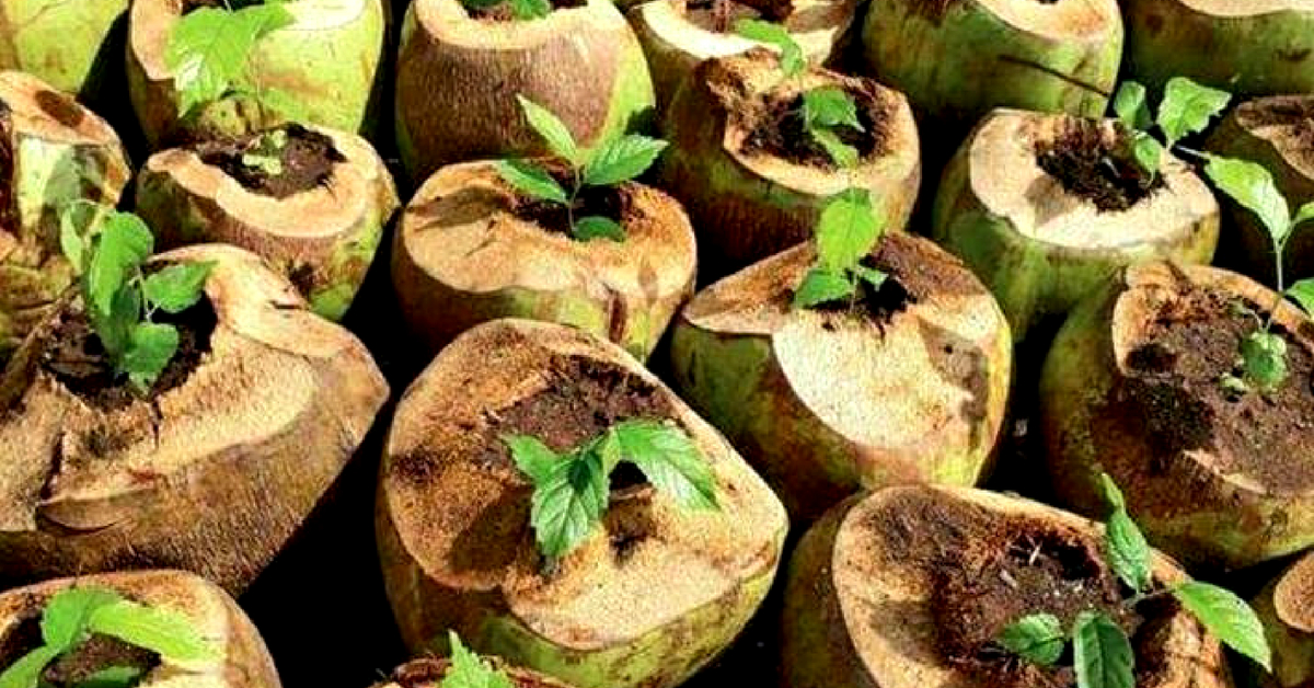 Gujarat Forest Dept. Finds Awesome Eco-Alternative to Plastic Pots – Coconut Shells!