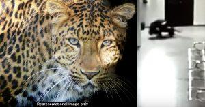 leopard mother doggo news video