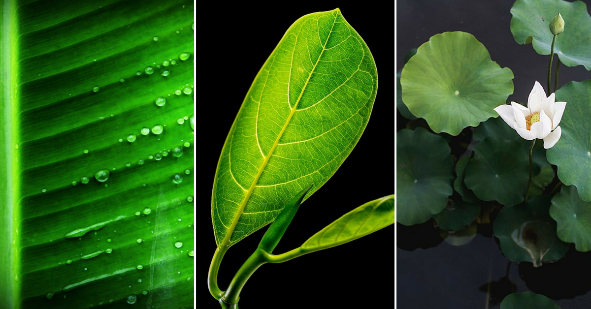 Not Just Banana, Eating On These Native Leaves Can Leave You Nourished Too!