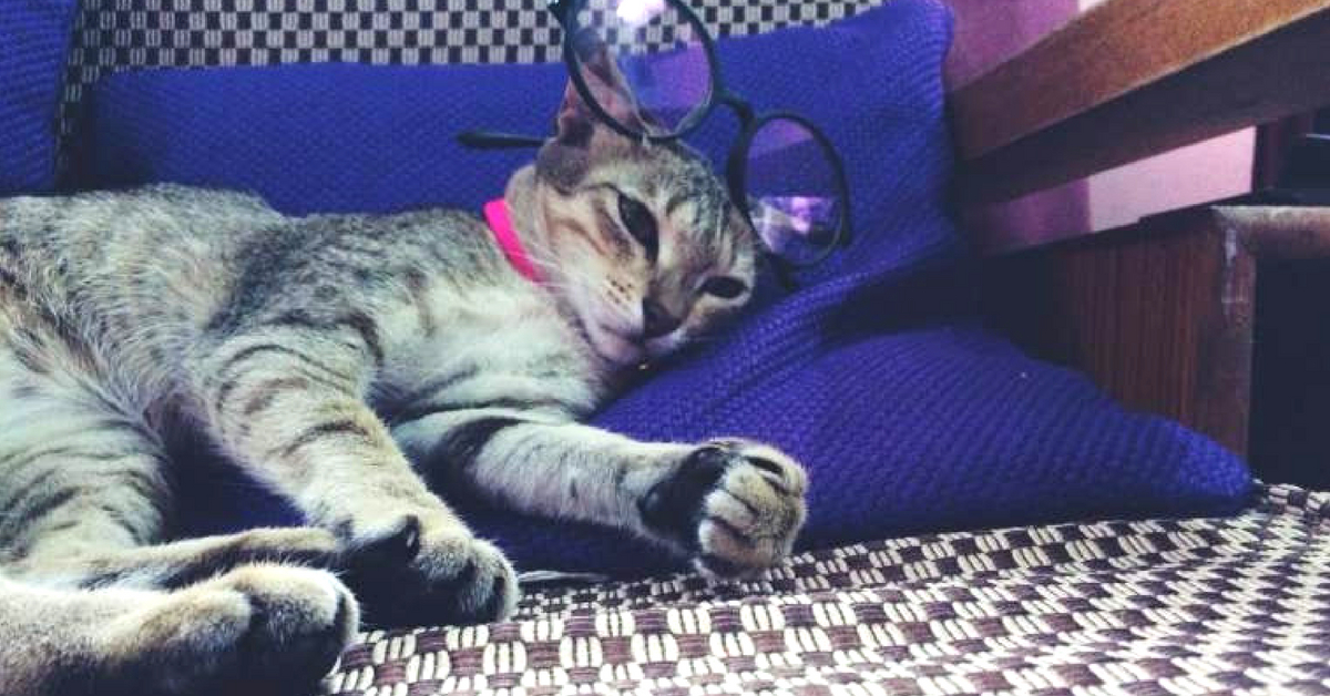 Adopt Don't Shop: Meet The Furry Finalists of India's Cutest Rescued Cat Alive!