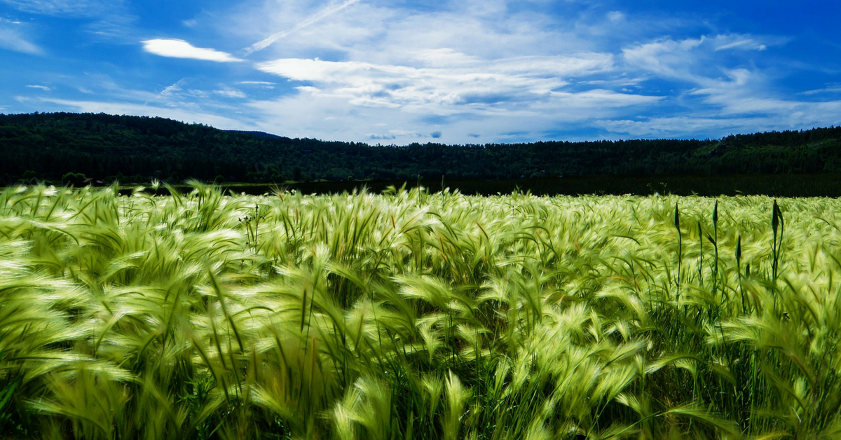 Thanks to Indian-Origin Scientists, Plants Can Now Create Their Own Fertiliser!