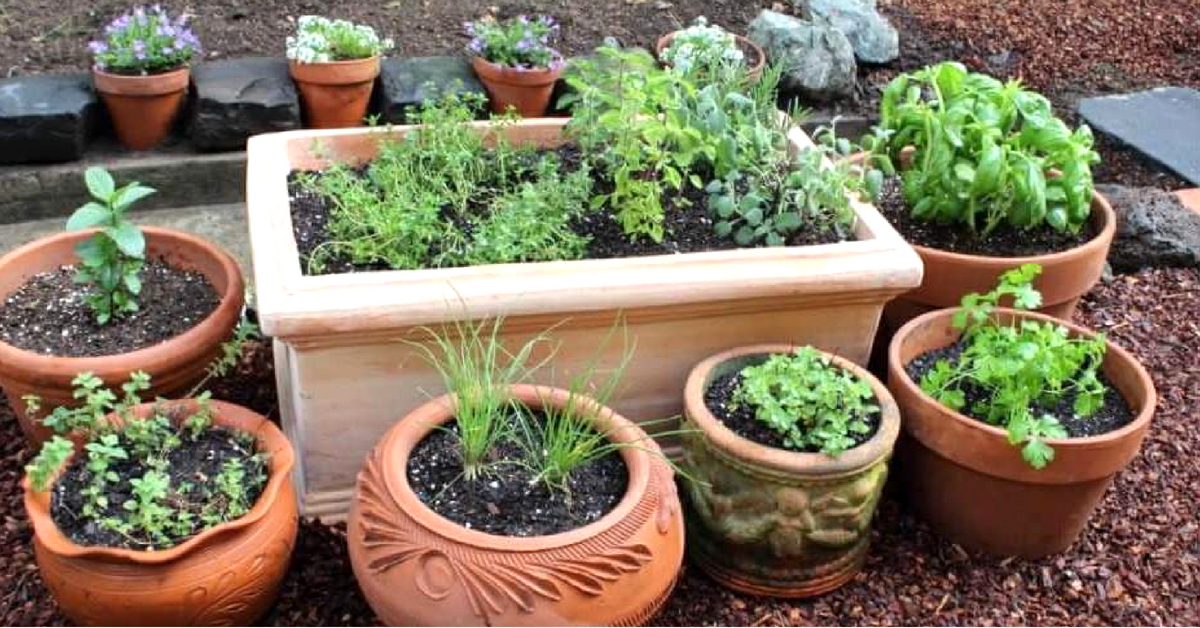 Time-Tested Remedies: Why & How to Grow Your Own 'Healing' Garden at Home!